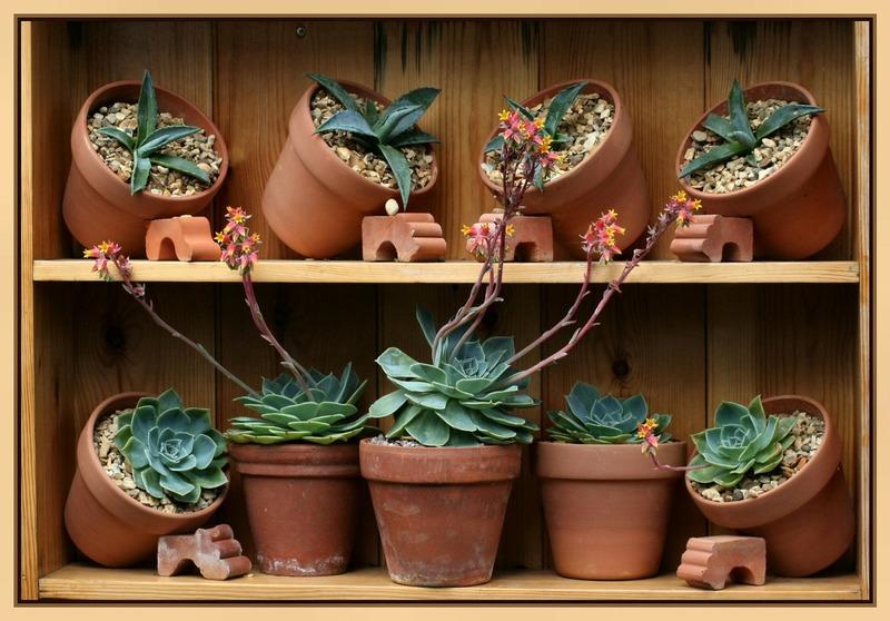 Vasos cerâmicos na decoração