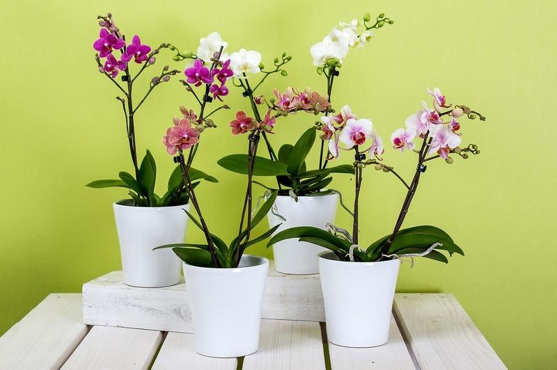Vasos de resina na decoração