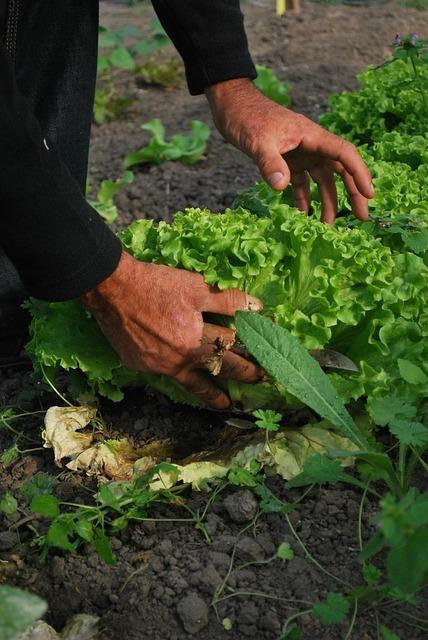 Como aproveitar seu terreno com uma horta