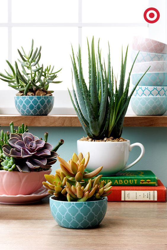 Vasos pequenos para decorar área interna da casa