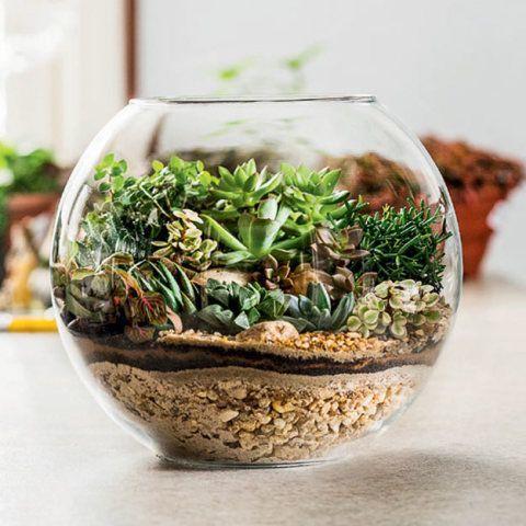 Terrário aberto com jardim pequeno