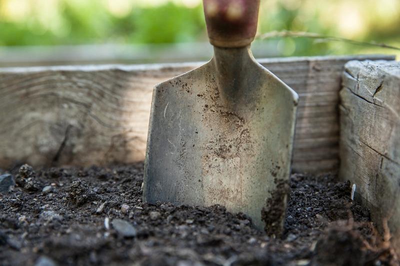4 dicas para planejar seu jardim e escolher um espaço