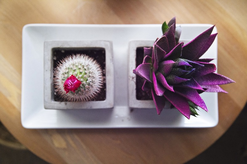 4 dicas para planejar seu jardim e escolher quais espécies de plantas usar