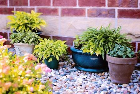 Plants in pots 818718 1280