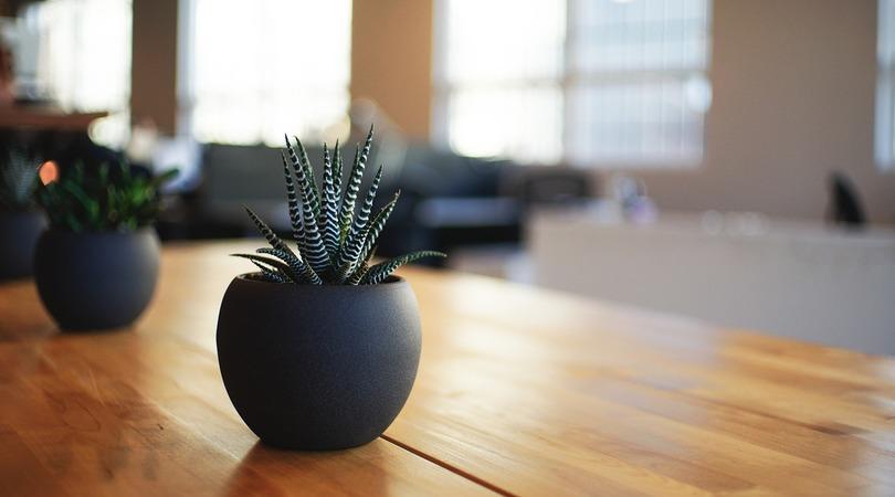 Como usar vasos e cachepots na decoração